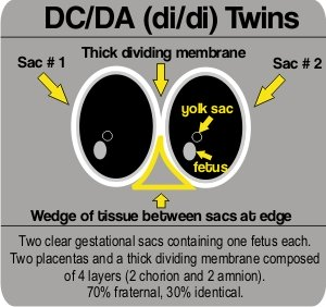 how early can a dating ultrasound be done In some respects the seven week ultrasound can be quite accurate because the embryo is developing very quickly they are also not as mobile and active as they will be with future development so obtaining accurate measurements and visualising them clearly on the screen is a little easier than when they are able to do somersaults and move around .